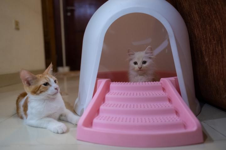 kotak pasir kucing