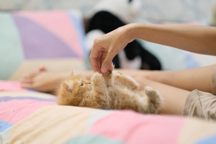 kucing dipegang perutnya