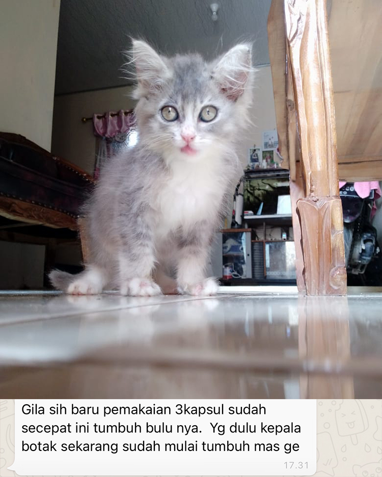 vitamin kucing
